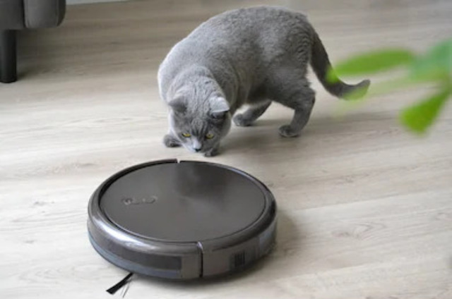 un chat avec un aspirateur robot
